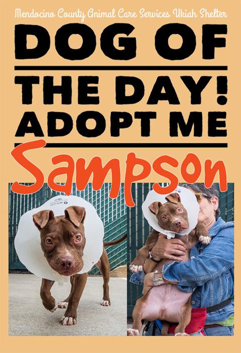Sampson