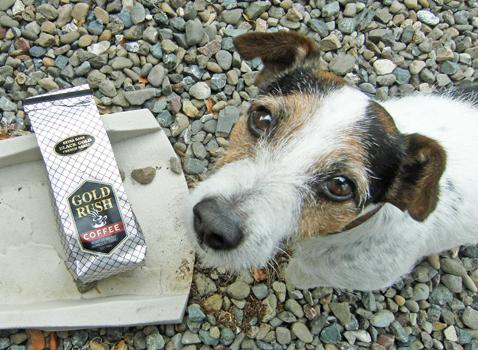 dogwithcoffee