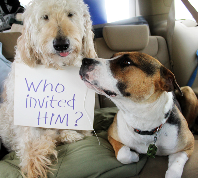 the-jackson-chronicles-dog-sign-friend