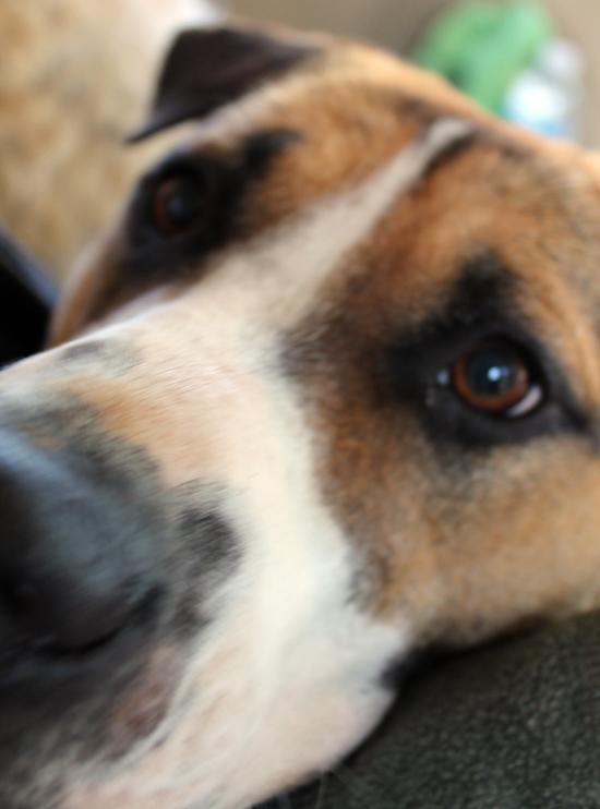 the-jackson-chronicles-dog-sulking