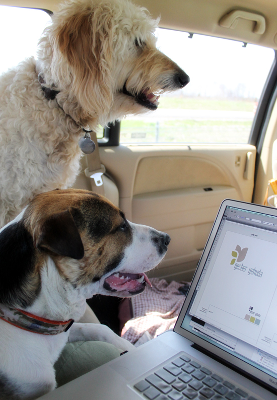 the-jackson-chronicles-dogs-working