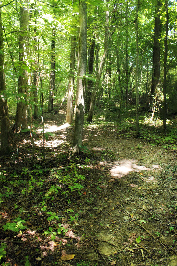 tennessee-wood-walking-path-2