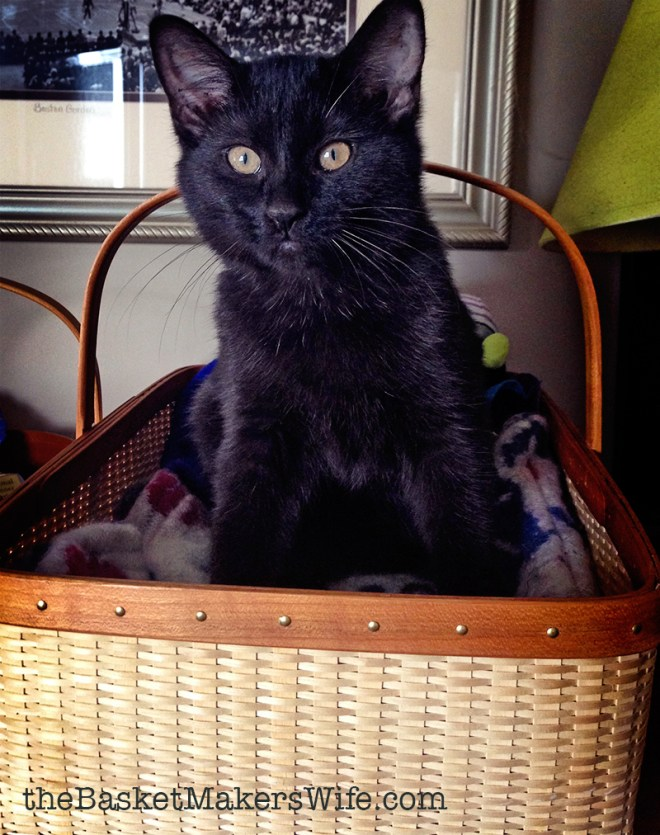 Eartha-Kitt-kitten-rescue-workshop