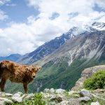 Photo Journal: The Annapurna Circuit