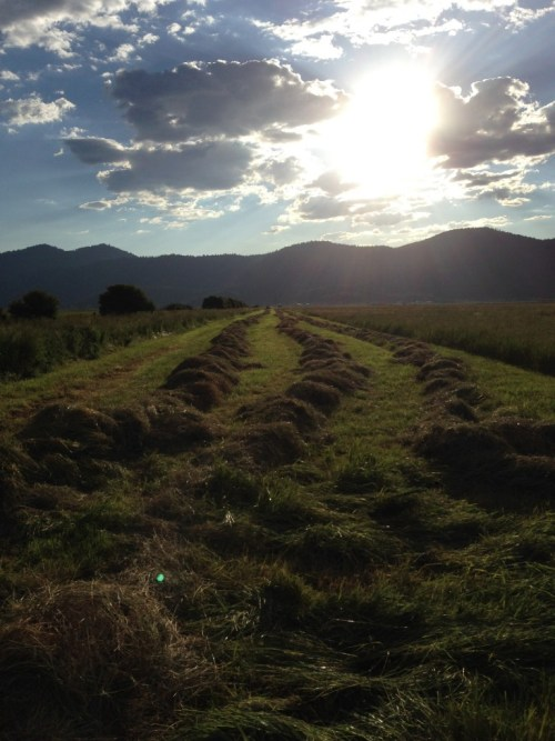 Hay in Indian Valley