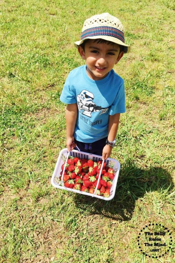 A strawberry picking1