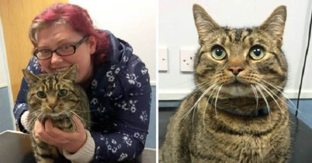 Owner Laura Wharton was shocked and delighted to be reunited with her feline friend