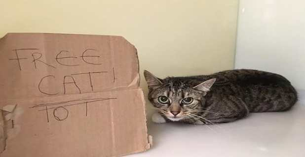 Cat abandoned in Motherwell next to 'Free Cat' sign