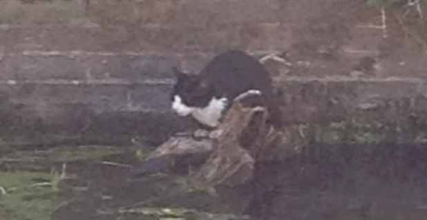 The cat became stranded in the river