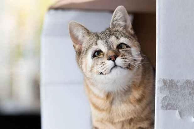 cats-without-eyelids-dora-felix-min