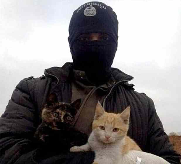 Senior ISIS clerics have issued a fatwa against cats (Picture: Twitter)