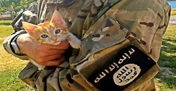 The new law forbids the indoor breeding of cats in the Iraqi city of Mosul (Picture: Israfil Yilmaz/Tumblr)