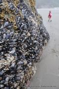 Mussels on a boulder.