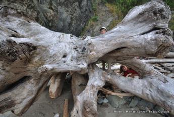 Driftwood at Goodman Creek inland trail.