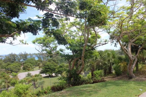 nassau, bahamas, foliage, trees, scenery
