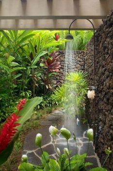 Tropical garden 4