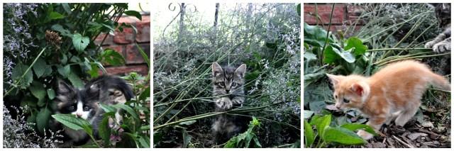 kitty collage jul 17