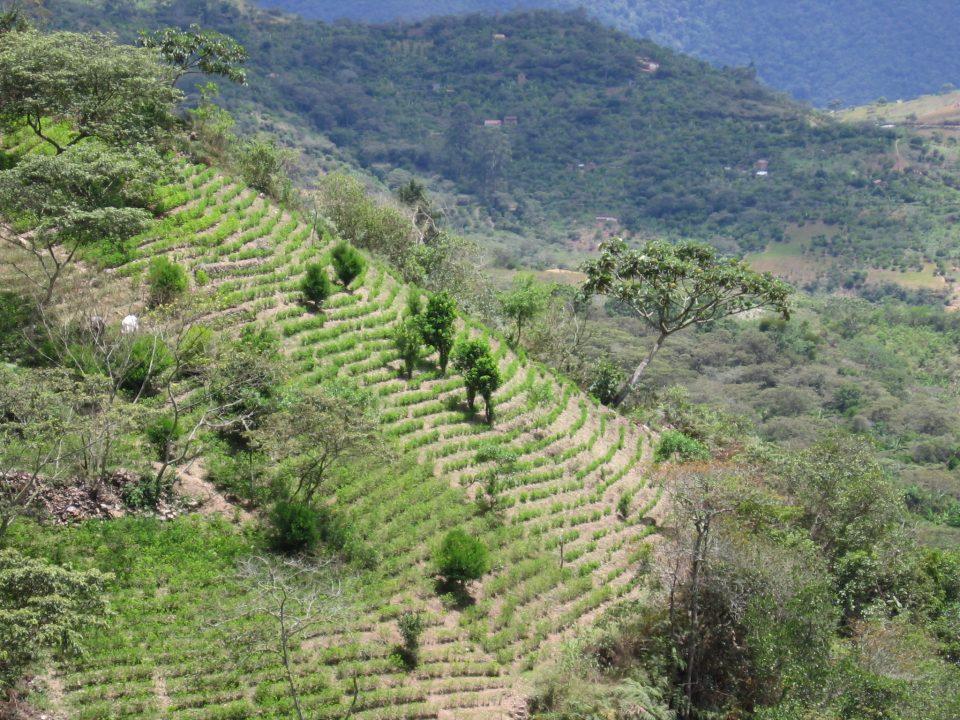 Curbing coca production