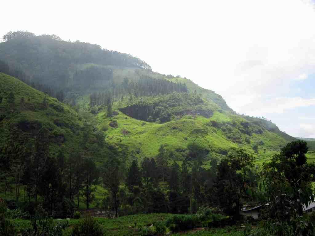 What to do in Nuwara Eliya