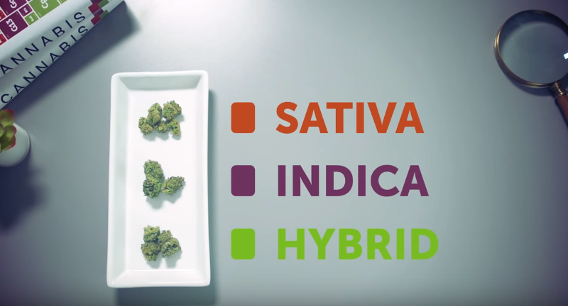 What's the difference between Indica, Sativa & Hybrid Leafly