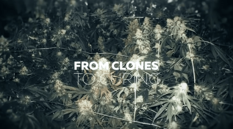 From Clones to Curing A Beginner's Journey in Cultivating Cannabis #2 - Transplanting Start System  RuffHouse