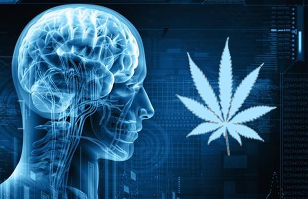 This is your brain on pot Neuroscientist studies long-term effects of medical marijuana Boston Globe2