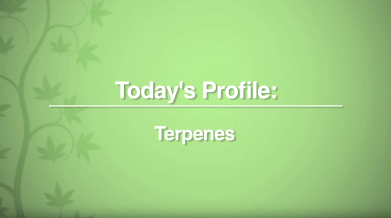 cannabinoid-profile-what-are-terpenes