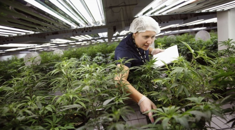 marijuana-is-becoming-a-billion-dollar-business-in-canada-now-all-it-has-to-do-is-become-legal
