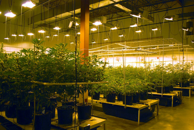 ohio-medical-marijuana-grow-licenses-would-be-capped-at-18-cost-200000