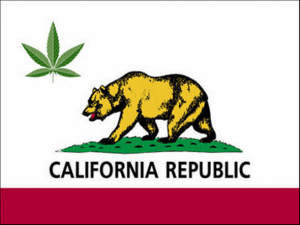 california-bear-medical-marijuana1