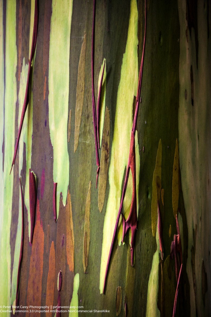 Photo Of The Day - Rainbow Eucalyptus Tree Bark
