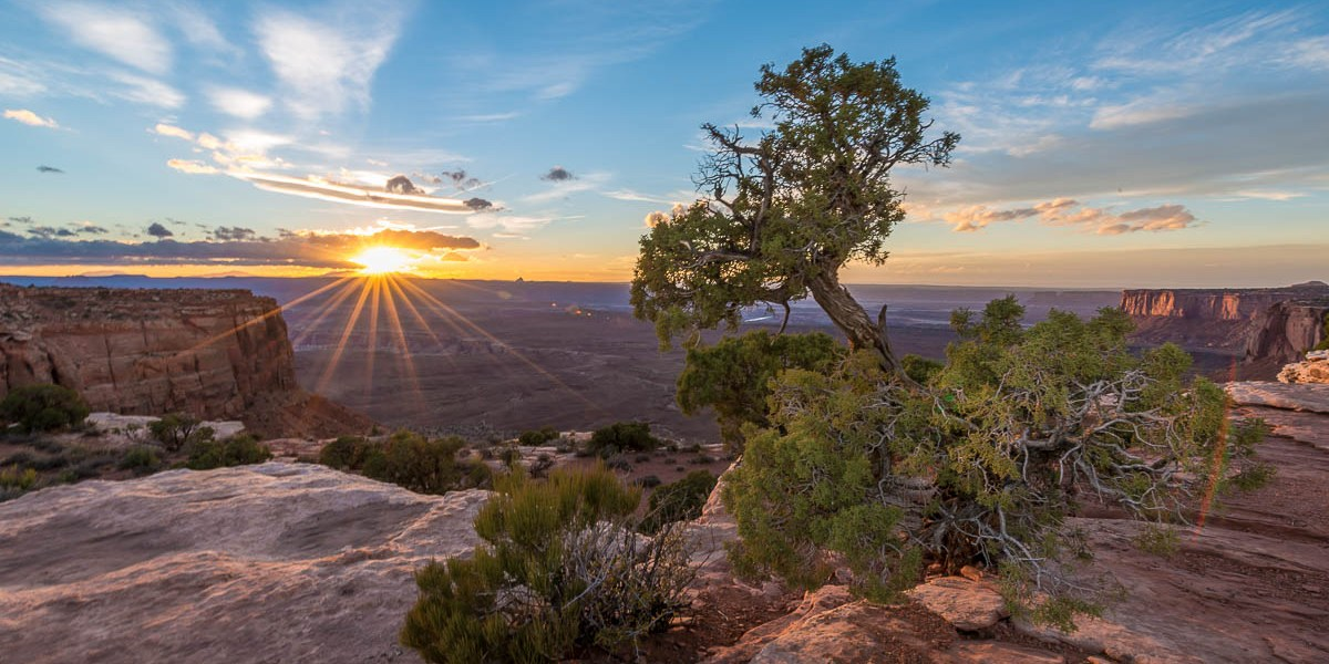 Photo Of The Day – Juniper And The Setting Sun