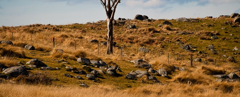 Lone tree on the dry side of Great Dividing Range