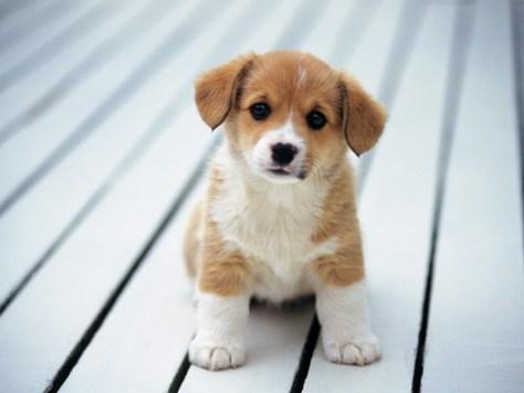 COLUMN: Puppies more adorable than babies