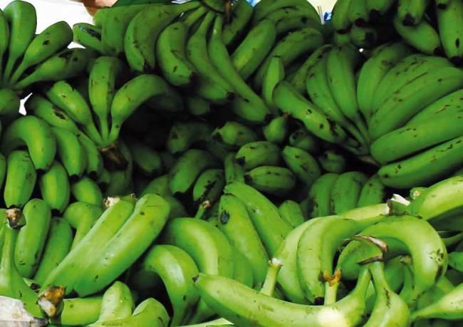 Banana's are at the heart of the economy of Santa Marta.
