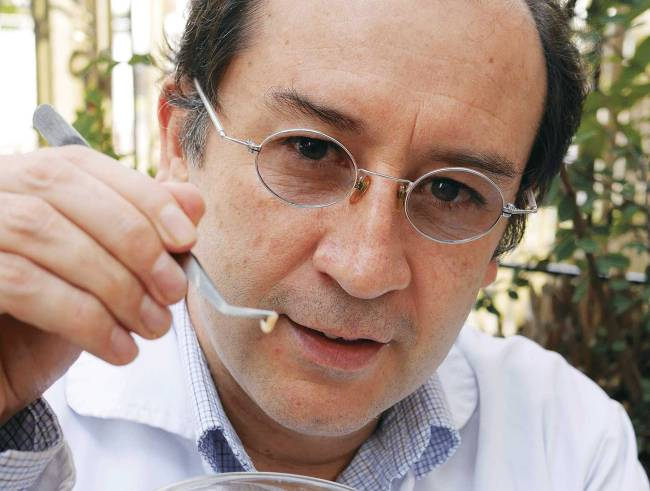 Dr. Hildermann Pedraza holds up a medicinal maggot used for cleaning wounds and infections.