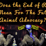 What Does The End Of Ringling Brothers Circus Mean For The Future Of Animal Advocacy? – Episode 65