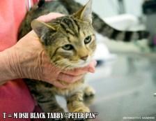 T-PeterPan