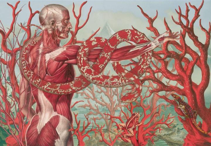 totenart-material-para-bellas-artes-juan-gatti-arte-anatomico-anatomia-proporcion-humana-arte-naturalista-musculos-humanos-huesos-humanos