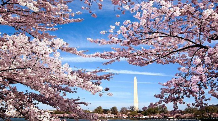 5 DOs and 5 DON'Ts in Washington D.C.