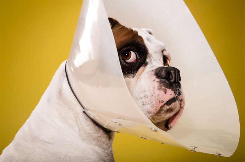 ty-foster-time-out-dogs-wearing-cones-designboom-03