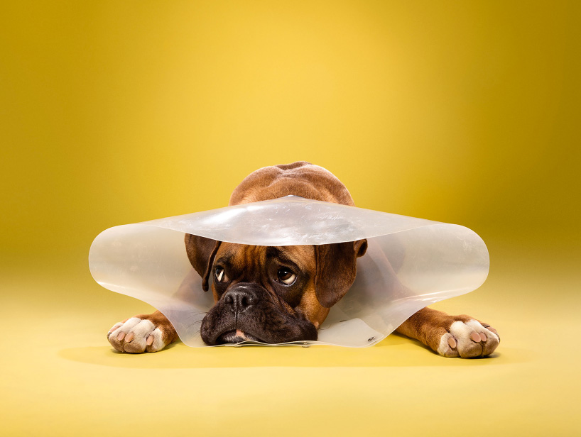 ty-foster-time-out-dogs-wearing-cones-designboom-06