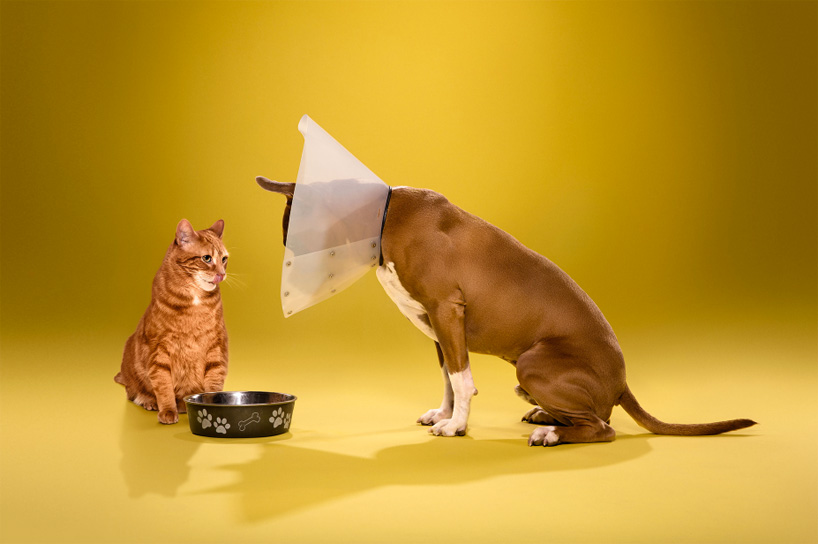 ty-foster-time-out-dogs-wearing-cones-designboom-07