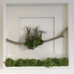 terrariums-london-greenwall-plant-office-houseplants-curious-gardener-close-9