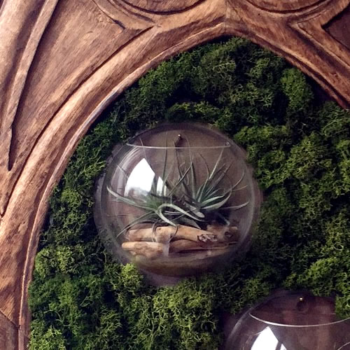 terrariums-london-picture frame-plant-home-houseplants-curious-gardener-gothic-victorian-steampunk1