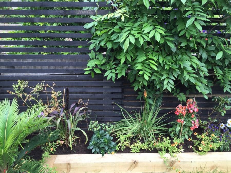 garden design crouch end london (11)