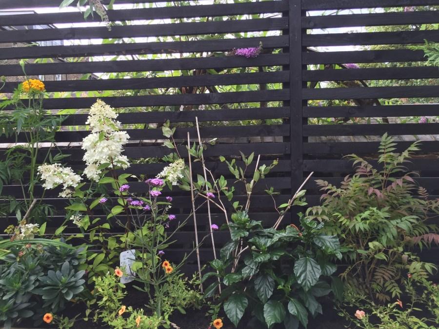 garden design crouch end london (2)