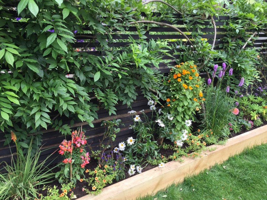 garden design crouch end london (5)