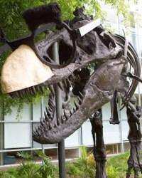 Goofy T-Rex