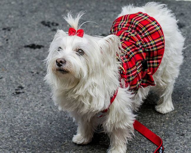 Hug Your Hound Day: Scotland Now readers' pictures of their adorable dogs